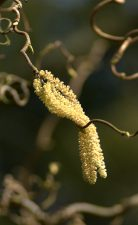 Forår i luften