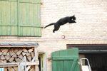 Katten springer ud